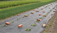 Rashladna tkanina spas za biljke tokom vrelih dana