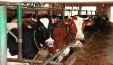 Šta je najveći problem u proizvodnji mlečnih proizvoda?